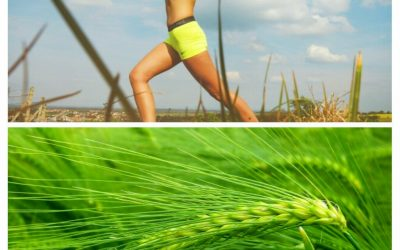Barley Grass Powder – Discover the Power of Antioxidants